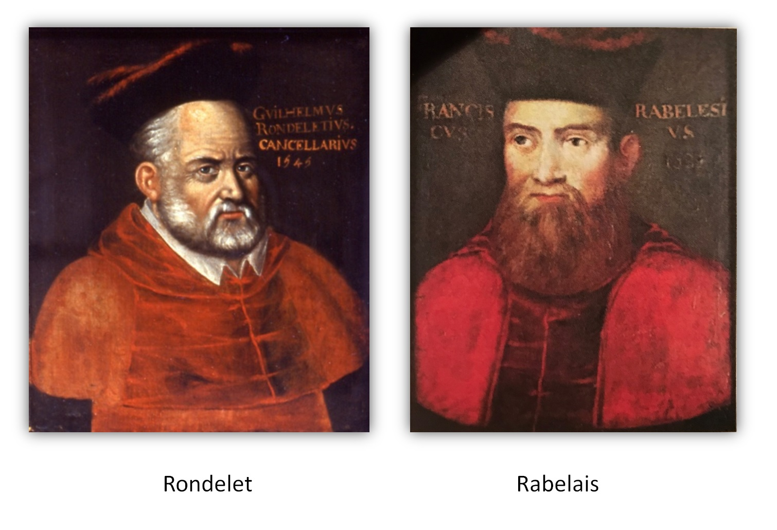 4. 1452-1556 Rabelais et Rondelet