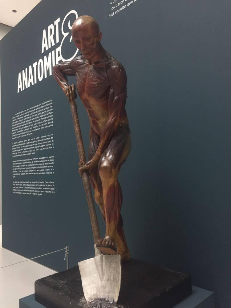 art et anatomie